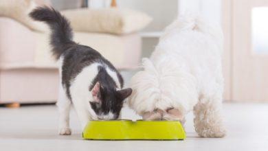 Photo of Når katten er ude, danser musene på bordet